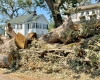 Derecho Devastation-Cedar Rapids-8.10.2020_©2020-Jonathan-David-Sabin_All-Rights-Reserved